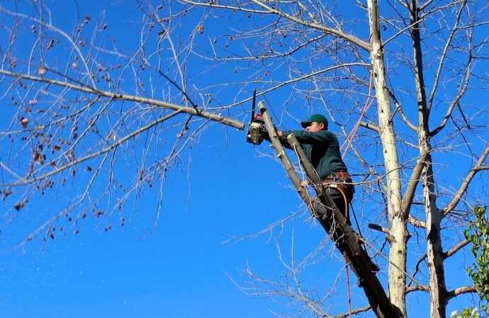 Contact Us-Plantation FL Tree Trimming and Stump Grinding Services-We Offer Tree Trimming Services, Tree Removal, Tree Pruning, Tree Cutting, Residential and Commercial Tree Trimming Services, Storm Damage, Emergency Tree Removal, Land Clearing, Tree Companies, Tree Care Service, Stump Grinding, and we're the Best Tree Trimming Company Near You Guaranteed!