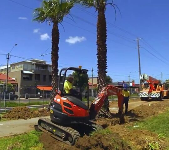 Palm Tree Removal-Plantation FL Tree Trimming and Stump Grinding Services-We Offer Tree Trimming Services, Tree Removal, Tree Pruning, Tree Cutting, Residential and Commercial Tree Trimming Services, Storm Damage, Emergency Tree Removal, Land Clearing, Tree Companies, Tree Care Service, Stump Grinding, and we're the Best Tree Trimming Company Near You Guaranteed!
