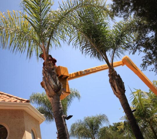 Palm Tree Trimming-Plantation FL Tree Trimming and Stump Grinding Services-We Offer Tree Trimming Services, Tree Removal, Tree Pruning, Tree Cutting, Residential and Commercial Tree Trimming Services, Storm Damage, Emergency Tree Removal, Land Clearing, Tree Companies, Tree Care Service, Stump Grinding, and we're the Best Tree Trimming Company Near You Guaranteed!