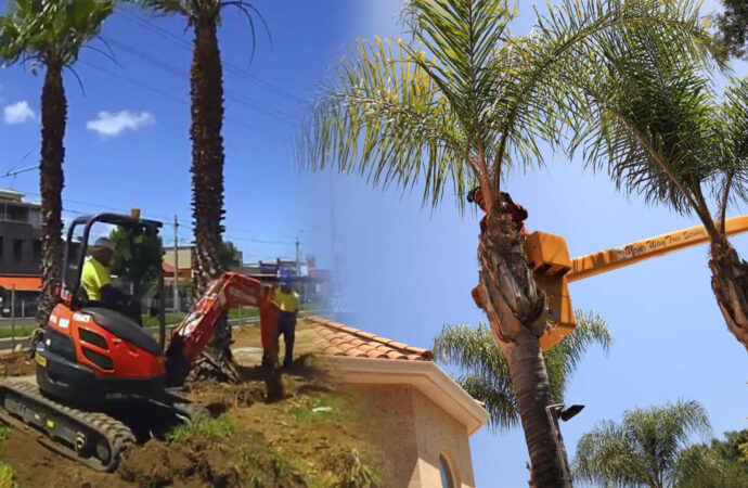 Palm tree trimming & palm tree removal-Plantation FL Tree Trimming and Stump Grinding Services-We Offer Tree Trimming Services, Tree Removal, Tree Pruning, Tree Cutting, Residential and Commercial Tree Trimming Services, Storm Damage, Emergency Tree Removal, Land Clearing, Tree Companies, Tree Care Service, Stump Grinding, and we're the Best Tree Trimming Company Near You Guaranteed!