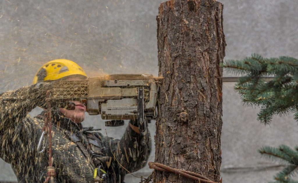 Plantation FL Tree Trimming and Stump Grinding Services Home Page Image-We Offer Tree Trimming Services, Tree Removal, Tree Pruning, Tree Cutting, Residential and Commercial Tree Trimming Services, Storm Damage, Emergency Tree Removal, Land Clearing, Tree Companies, Tree Care Service, Stump Grinding, and we're the Best Tree Trimming Company Near You Guaranteed!