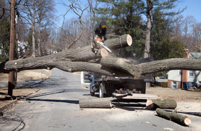 Residential Tree Services-Plantation FL Tree Trimming and Stump Grinding Services-We Offer Tree Trimming Services, Tree Removal, Tree Pruning, Tree Cutting, Residential and Commercial Tree Trimming Services, Storm Damage, Emergency Tree Removal, Land Clearing, Tree Companies, Tree Care Service, Stump Grinding, and we're the Best Tree Trimming Company Near You Guaranteed!
