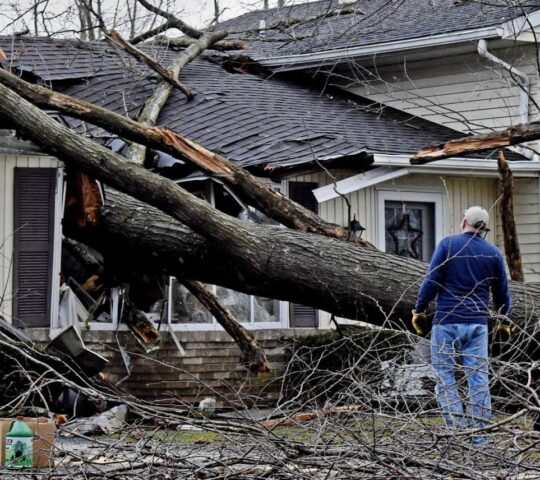 Storm Damage-Plantation FL Tree Trimming and Stump Grinding Services-We Offer Tree Trimming Services, Tree Removal, Tree Pruning, Tree Cutting, Residential and Commercial Tree Trimming Services, Storm Damage, Emergency Tree Removal, Land Clearing, Tree Companies, Tree Care Service, Stump Grinding, and we're the Best Tree Trimming Company Near You Guaranteed!