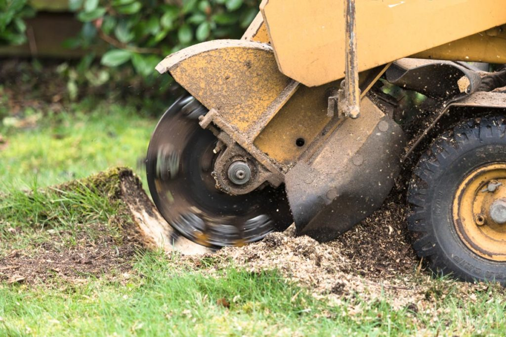 Stump Grinding-Plantation FL Tree Trimming and Stump Grinding Services-We Offer Tree Trimming Services, Tree Removal, Tree Pruning, Tree Cutting, Residential and Commercial Tree Trimming Services, Storm Damage, Emergency Tree Removal, Land Clearing, Tree Companies, Tree Care Service, Stump Grinding, and we're the Best Tree Trimming Company Near You Guaranteed!