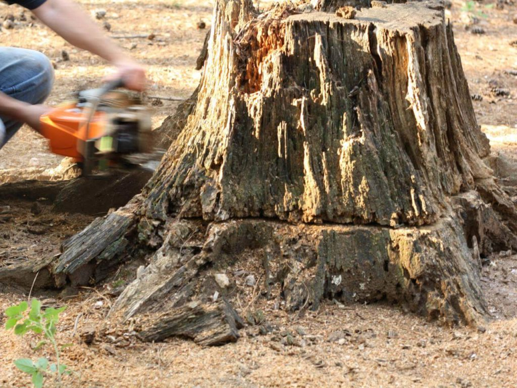 Stump Removal-Plantation FL Tree Trimming and Stump Grinding Services-We Offer Tree Trimming Services, Tree Removal, Tree Pruning, Tree Cutting, Residential and Commercial Tree Trimming Services, Storm Damage, Emergency Tree Removal, Land Clearing, Tree Companies, Tree Care Service, Stump Grinding, and we're the Best Tree Trimming Company Near You Guaranteed!