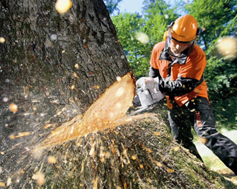 Tree Cutting-Plantation FL Tree Trimming and Stump Grinding Services-We Offer Tree Trimming Services, Tree Removal, Tree Pruning, Tree Cutting, Residential and Commercial Tree Trimming Services, Storm Damage, Emergency Tree Removal, Land Clearing, Tree Companies, Tree Care Service, Stump Grinding, and we're the Best Tree Trimming Company Near You Guaranteed!