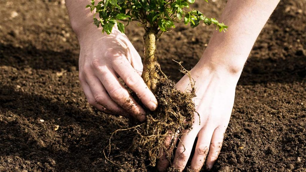 Tree Planting-Plantation FL Tree Trimming and Stump Grinding Services-We Offer Tree Trimming Services, Tree Removal, Tree Pruning, Tree Cutting, Residential and Commercial Tree Trimming Services, Storm Damage, Emergency Tree Removal, Land Clearing, Tree Companies, Tree Care Service, Stump Grinding, and we're the Best Tree Trimming Company Near You Guaranteed!