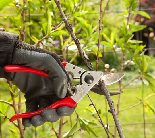 Tree Pruning-Plantation FL Tree Trimming and Stump Grinding Services-We Offer Tree Trimming Services, Tree Removal, Tree Pruning, Tree Cutting, Residential and Commercial Tree Trimming Services, Storm Damage, Emergency Tree Removal, Land Clearing, Tree Companies, Tree Care Service, Stump Grinding, and we're the Best Tree Trimming Company Near You Guaranteed!