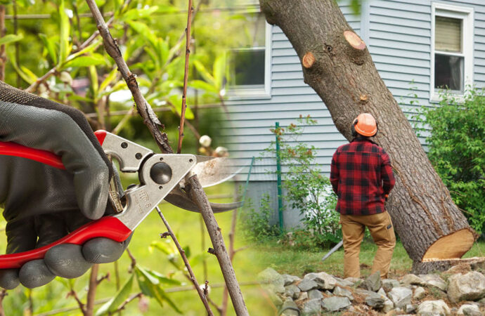 Tree pruning & tree removal-Plantation FL Tree Trimming and Stump Grinding Services-We Offer Tree Trimming Services, Tree Removal, Tree Pruning, Tree Cutting, Residential and Commercial Tree Trimming Services, Storm Damage, Emergency Tree Removal, Land Clearing, Tree Companies, Tree Care Service, Stump Grinding, and we're the Best Tree Trimming Company Near You Guaranteed!